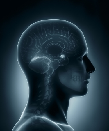 pituitary gland: Amygdala medical x-ray scan Stock Photo