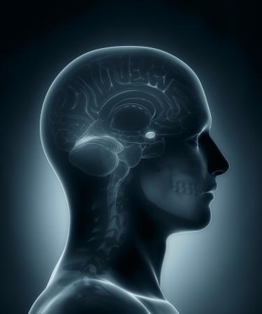 Amygdala medical x-ray scan Standard-Bild