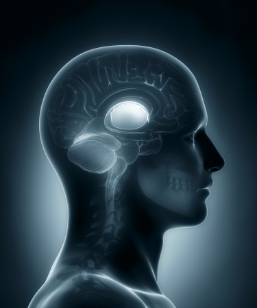 brainpan: Basal ganglia medical x-ray scan Stock Photo
