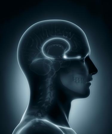 skull cranium: Olfactory bulb medical x-ray scan Stock Photo