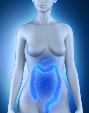 gut: Female colon anatomy