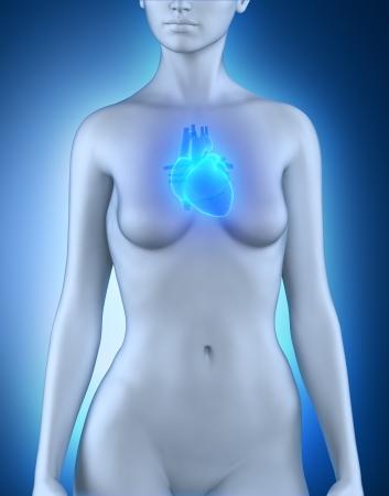 abdominal pain: Female heart anatomy Stock Photo