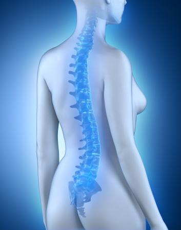 adult bones: Female spine anatomy  view Stock Photo