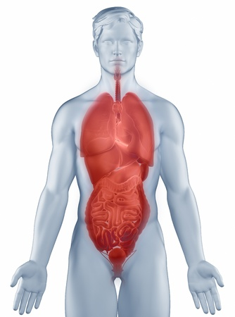 Organs position anatomy man isolated Stock Photo - 19707369