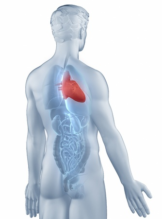 Heart Position Anatomy Man Isolated Stock Photo, Picture And Royalty ...