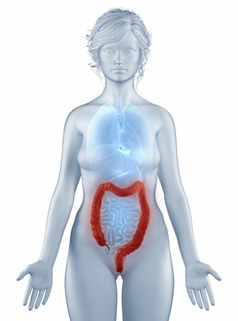 Colon anatomy Stock Photo - 19707386