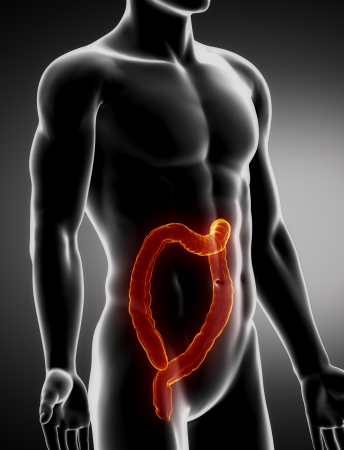 Colon male anatomy anter x-ray view Stock Photo - 20902053