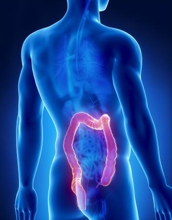 rectum cancer: Colon male anatomy posterior x-ray view Stock Photo