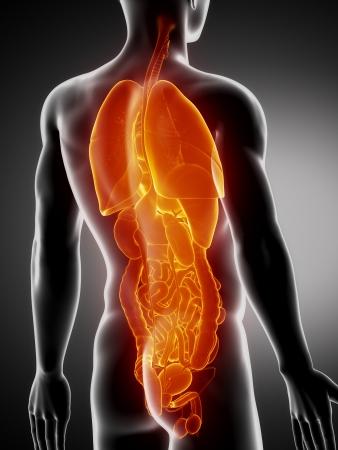 Weiblichen Organe Anatomie X-ray Rückansicht Lizenzfreie Fotos ...