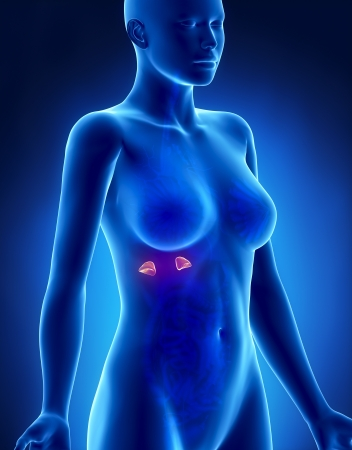 suprarrenales: Mujer ADRENAL anatomía vista lateral de rayos x
