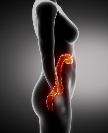 rectum cancer: Female COLON anatomy x-ray left view