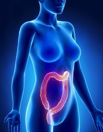 rectum cancer: Female COLON anatomy x-ray lateral view Stock Photo