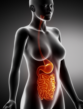 Stomach - Real View Female Anatomy Concept Stock Photo, Picture And ...