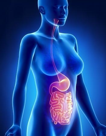 Weiblich Magen und Lunge Anatomie x-ray Seitenansicht Standard-Bild