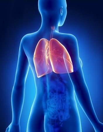 Female LUNGS and BRONCHUS anatomy x-ray posterior view Stock Photo - 21649946