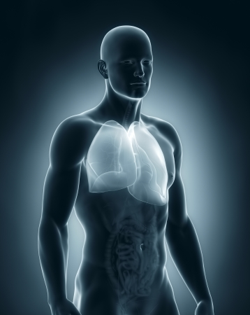 alveolos pulmonares: Pulmones Anatomía masculina Foto de archivo