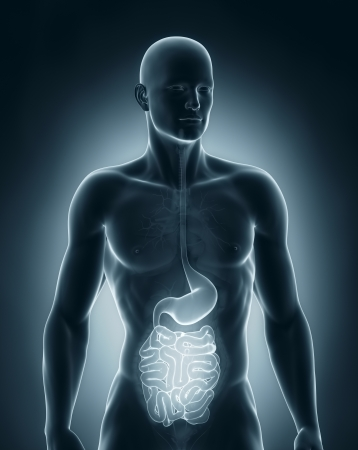 Man digestive system anatomy anterior view Stock Photo