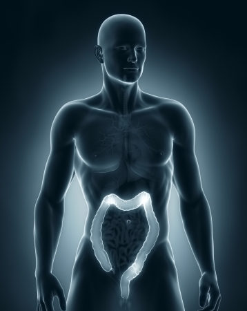 descending colon: Man colon natomy anterior view