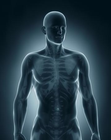anterior: Man anatomy anterior view