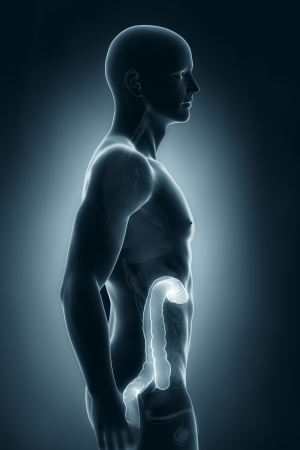 Man colon natomy lateral view Stock Photo - 21790101