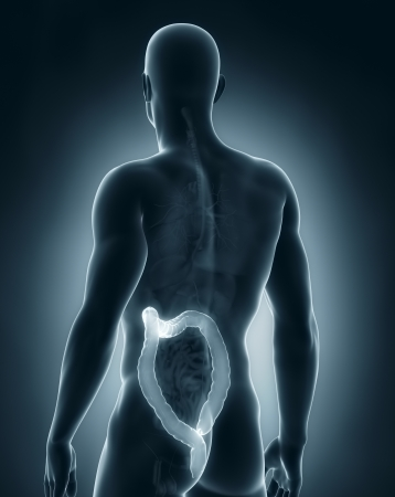 Man colon natomy Stock Photo - 21790237
