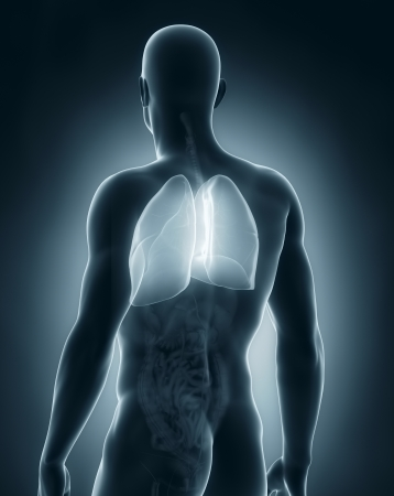 posterior: Male lungs anatomy posterior view Stock Photo