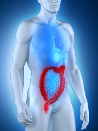 Man colon natomy Stock Photo - 21790311