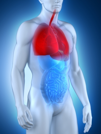 anterior: Male respiratory system anatomy anterior view