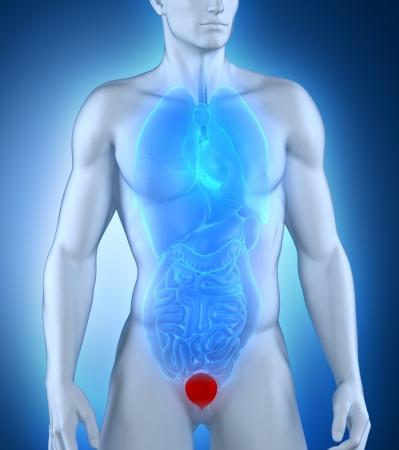 renal stone: Man bladder frontal anatomy