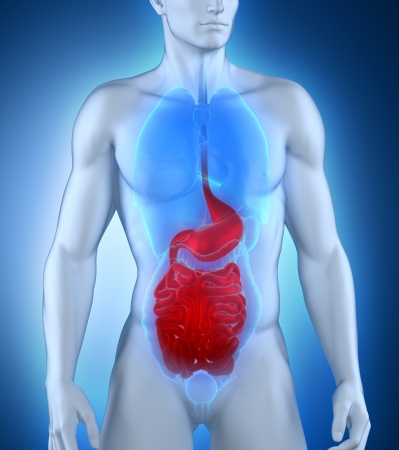 fundus of stomach: Male digestive system anatomy Stock Photo