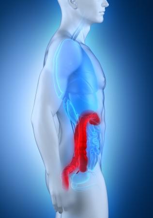 hemorrhoids: Man colon natomy lateral view