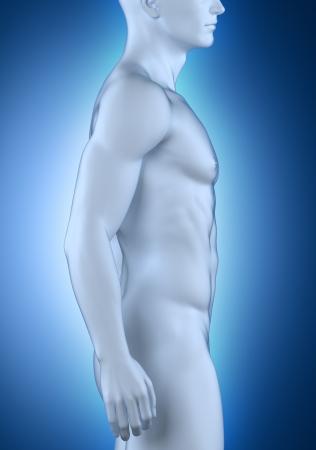 lateral: Anatom�a masculina vista lateral