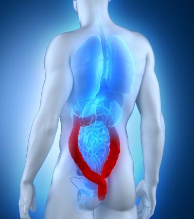 rectum cancer: Man colon natomy