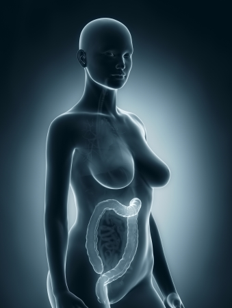 Woman colon anatomy Stock Photo - 24341591