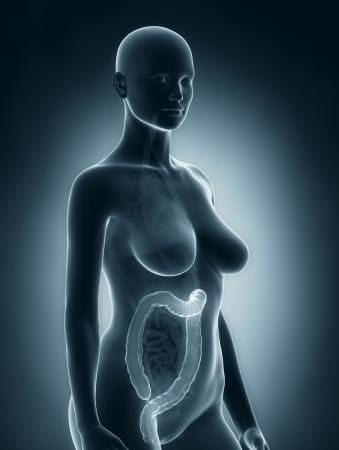 rectum cancer: Woman colon anatomy