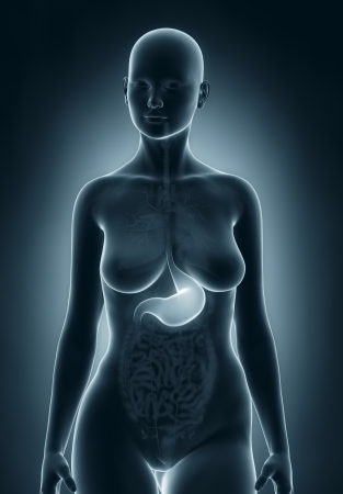Digestive stomach system real view female anatomy concept stock woman stomach anatomy photo ccuart Gallery