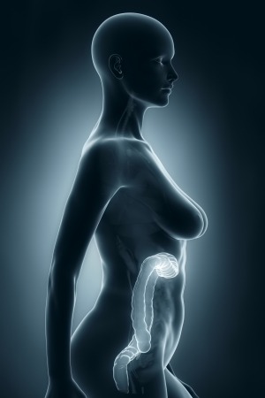 rectum cancer: Woman colon anatomy x-ray lateral view
