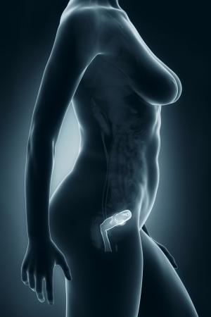 anatomy naked woman: Woman genitalia anatomy