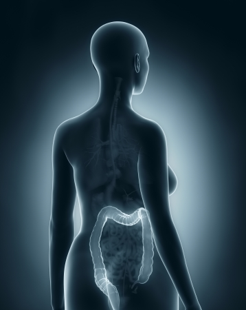 rectum cancer: Woman colon anatomy x-ray black posterior view