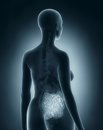 Woman guts anatomy x-ray black posterior view photo