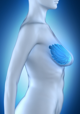 Woman breast anato my white lateral view photo