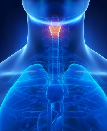 larynx: Larynx x-ray anatomy blue Stock Photo