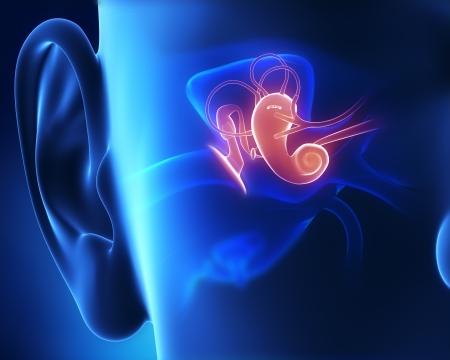 Middle ear anatomy photo