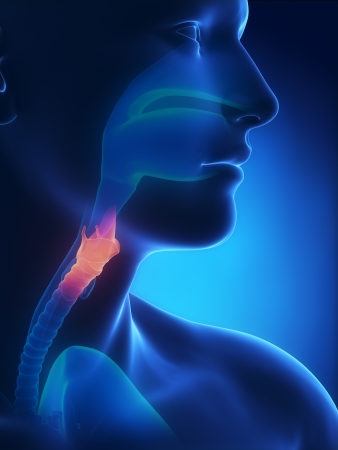 Larynx x-ray anatomy blue Banque d'images