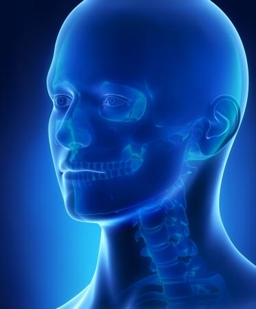 man face: Hoofd en schedel anatomie