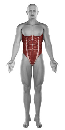 Male abdomen muscles anatomy isolated photo