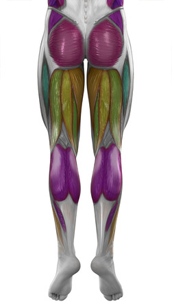 Male posterior legsmuscles map colorized isolated photo