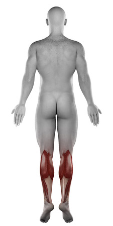 male CALVES anatomy posterior view isolated photo