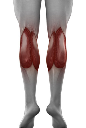 male GASTROCNEMIUS anatomy posterior view isolated photo