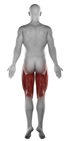 male HAMSTRINGS anatomy posterior view isolated photo